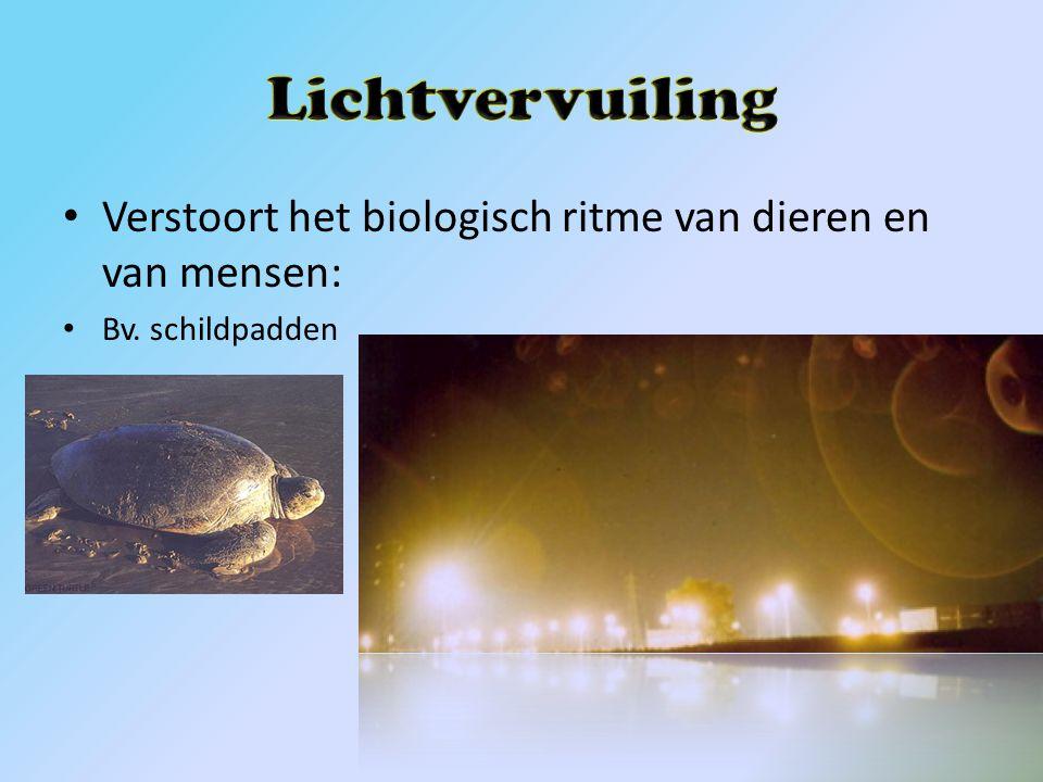 Lichtvervuiling Verstoort het biologisch ritme van dieren en van mensen: Bv. schildpadden