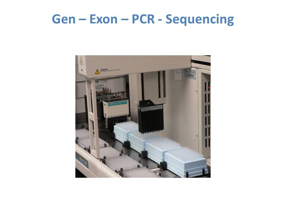 Gen – Exon – PCR - Sequencing
