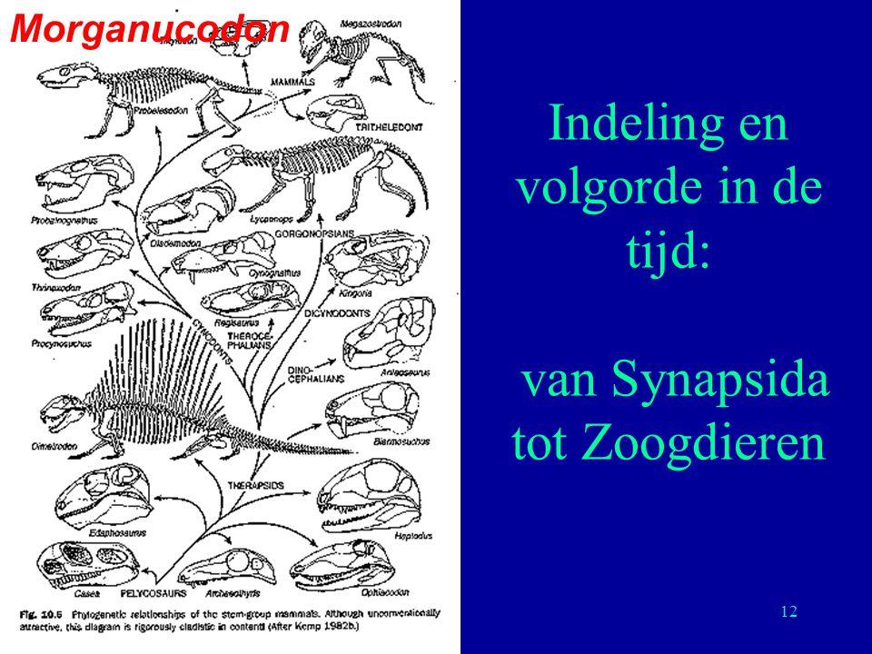Indeling en volgorde in de tijd: van Synapsida tot Zoogdieren