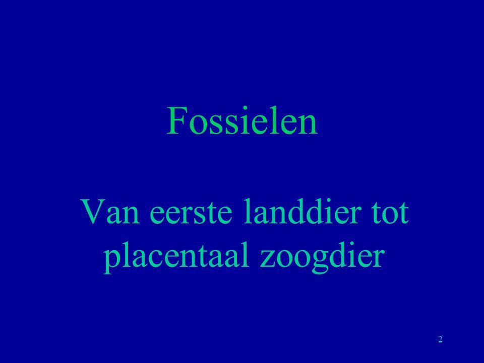 Van eerste landdier tot placentaal zoogdier