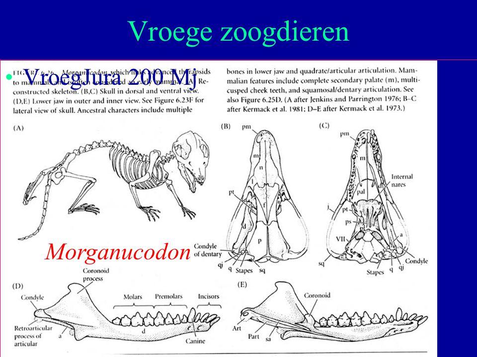 Vroege zoogdieren VroegJura 200 Mj Morganucodon Moleculaire Evolutie