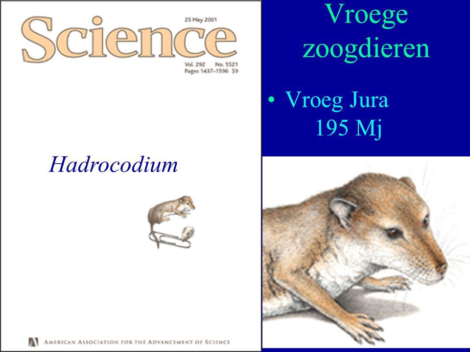 Vroege zoogdieren Vroeg Jura 195 Mj Hadrocodium Moleculaire Evolutie