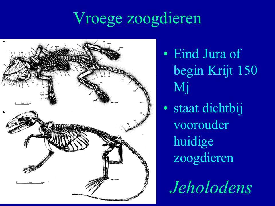 Jeholodens Vroege zoogdieren Eind Jura of begin Krijt 150 Mj