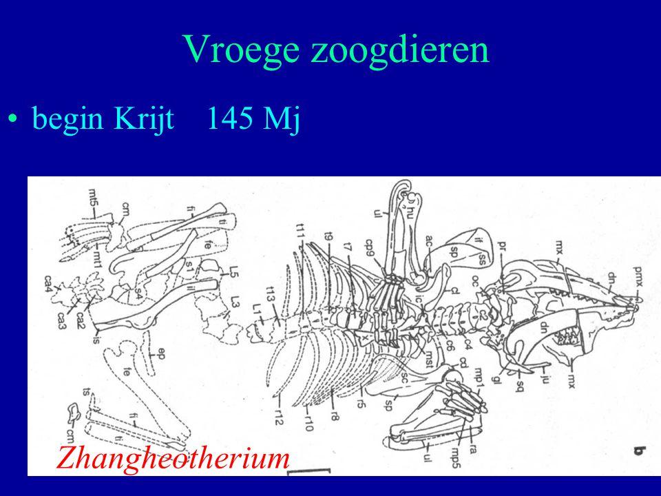 Vroege zoogdieren begin Krijt 145 Mj Zhangheotherium
