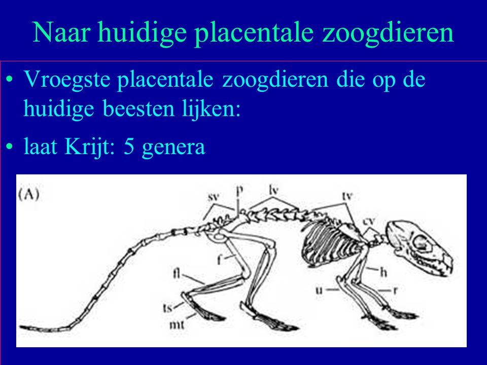 Naar huidige placentale zoogdieren