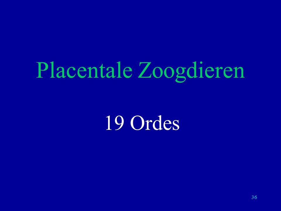 Placentale Zoogdieren