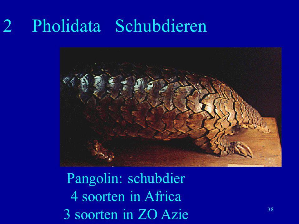 2 Pholidata Schubdieren