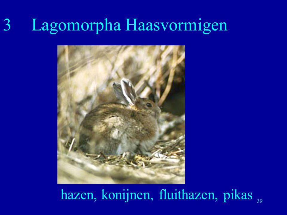 3 Lagomorpha Haasvormigen