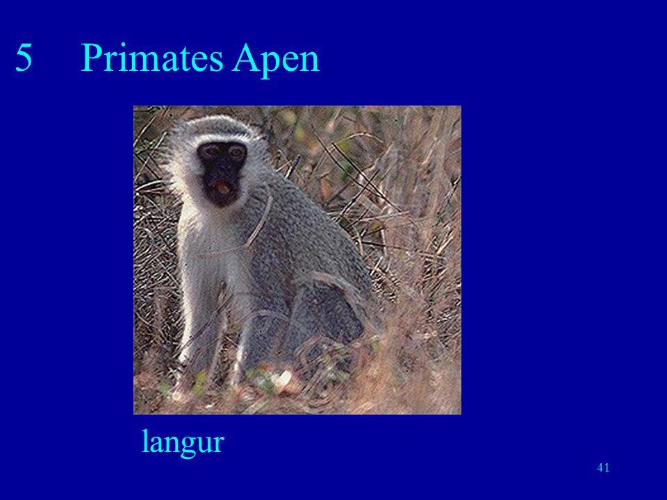 5 Primates Apen langur