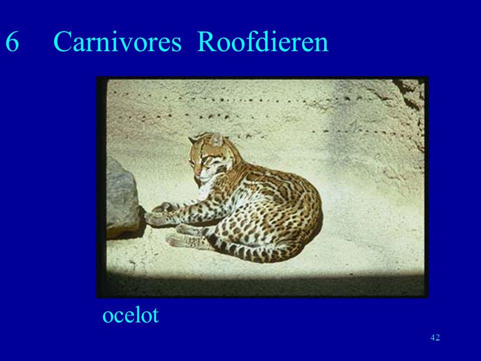 6 Carnivores Roofdieren