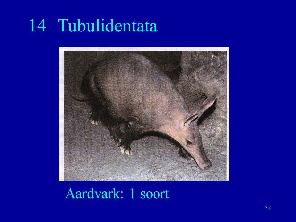 14 Tubulidentata Aardvark: 1 soort