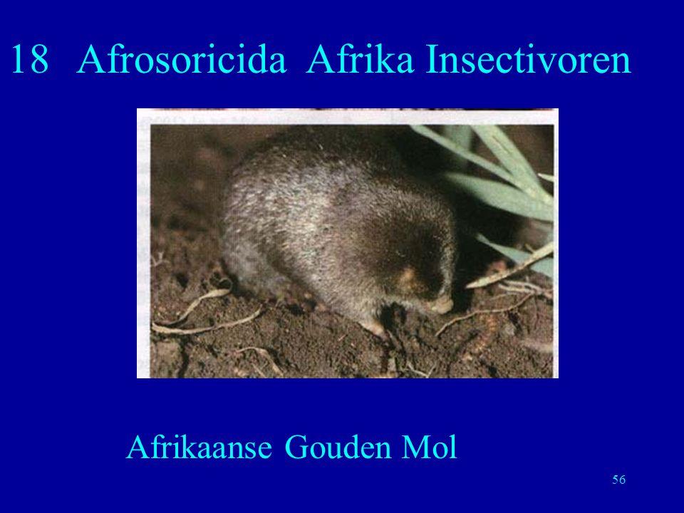 18 Afrosoricida Afrika Insectivoren