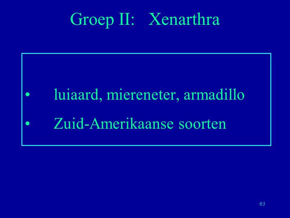 Groep II: Xenarthra luiaard, miereneter, armadillo