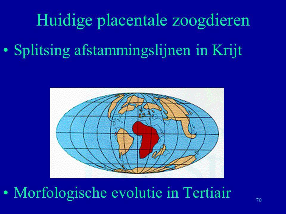 Huidige placentale zoogdieren