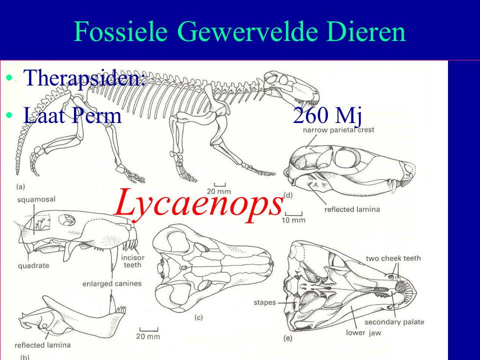 Fossiele Gewervelde Dieren