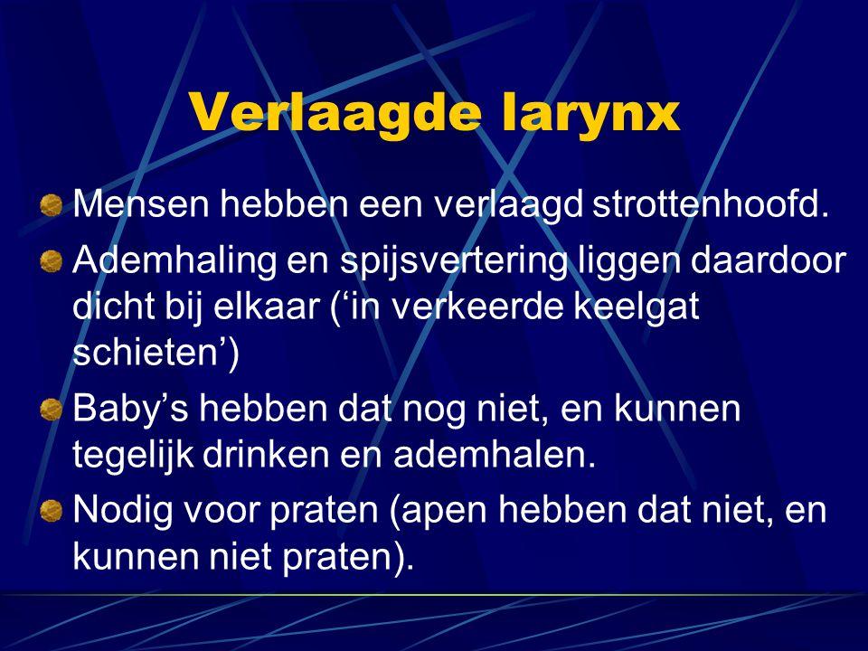 Verlaagde larynx Mensen hebben een verlaagd strottenhoofd.