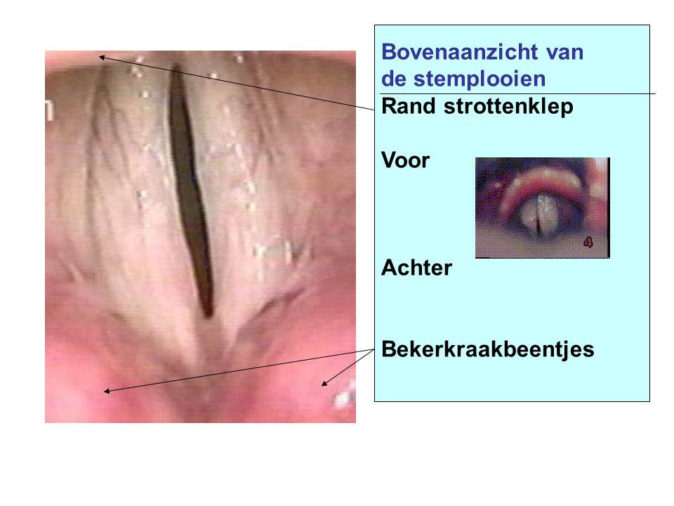 Bovenaanzicht van de stemplooien Rand strottenklep Voor Achter Bekerkraakbeentjes
