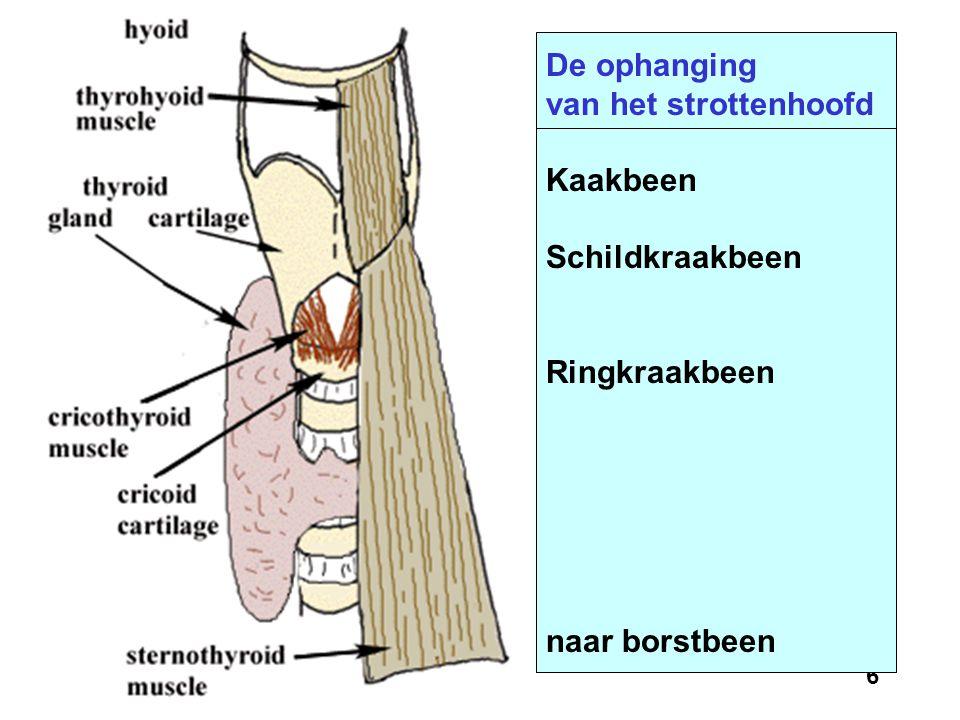 De ophanging van het strottenhoofd Kaakbeen Schildkraakbeen Ringkraakbeen naar borstbeen