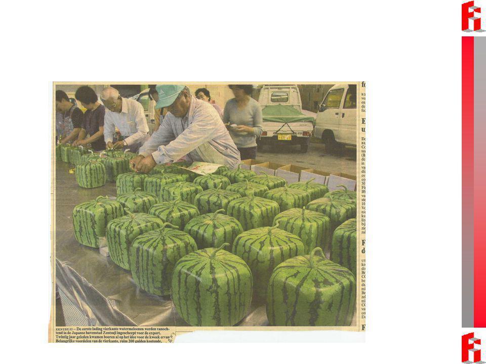 Waarom zijn kubusvormige watermeloenen handiger