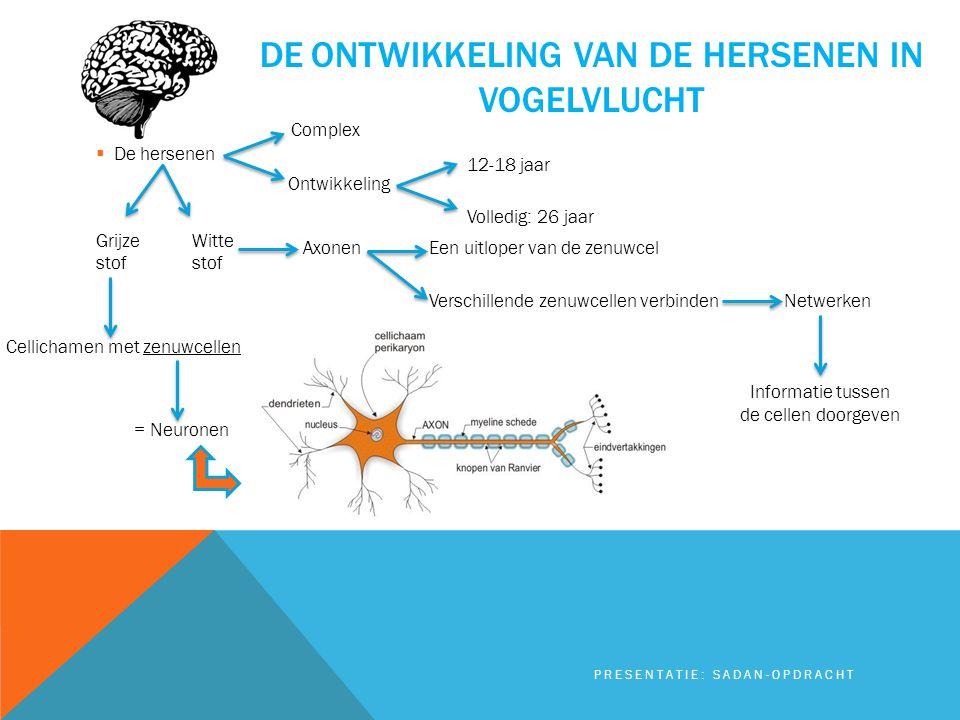 De ontwikkeling van de hersenen in vogelvlucht