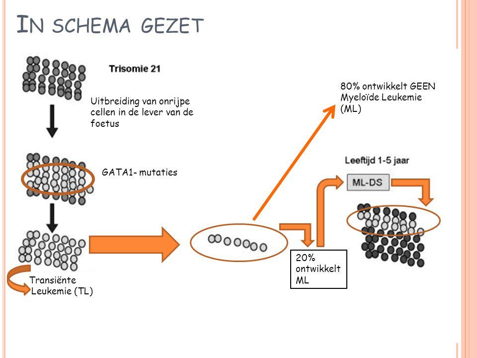 In schema gezet 80% ontwikkelt GEEN Myeloïde Leukemie (ML)
