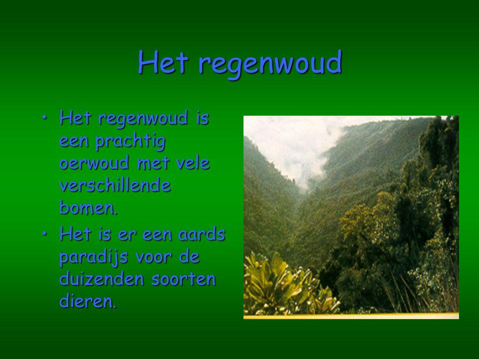 Het regenwoud Het regenwoud is een prachtig oerwoud met vele verschillende bomen.