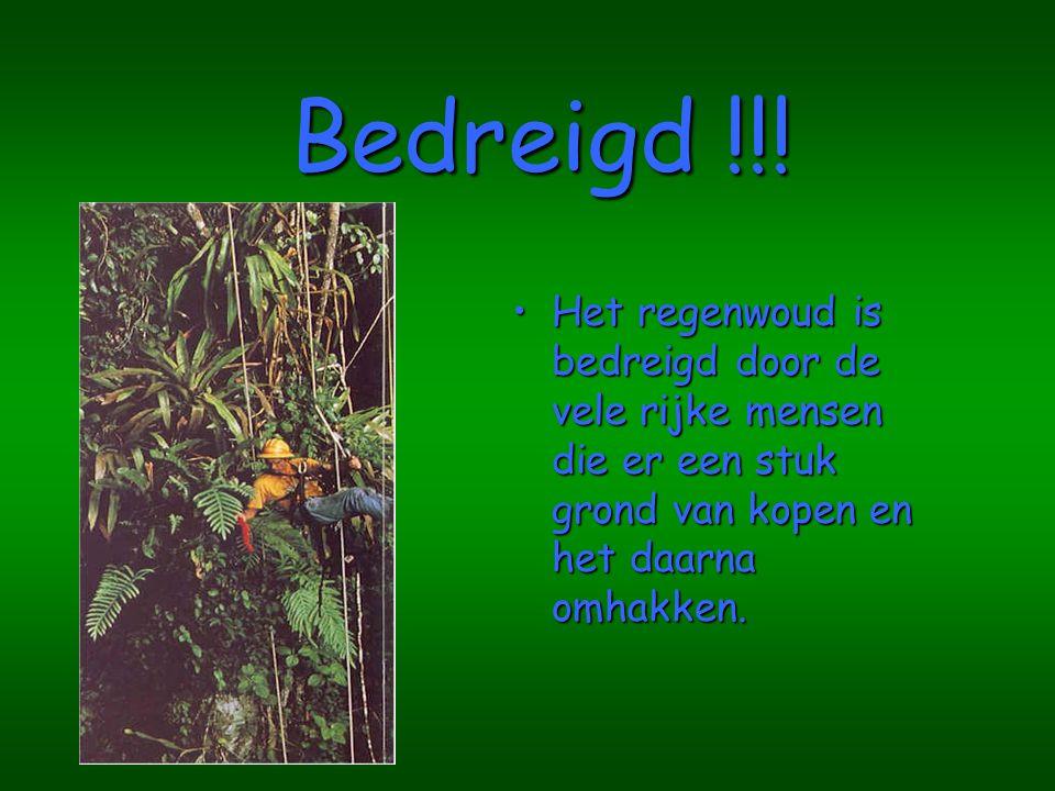 Bedreigd !!! Het regenwoud is bedreigd door de vele rijke mensen die er een stuk grond van kopen en het daarna omhakken.
