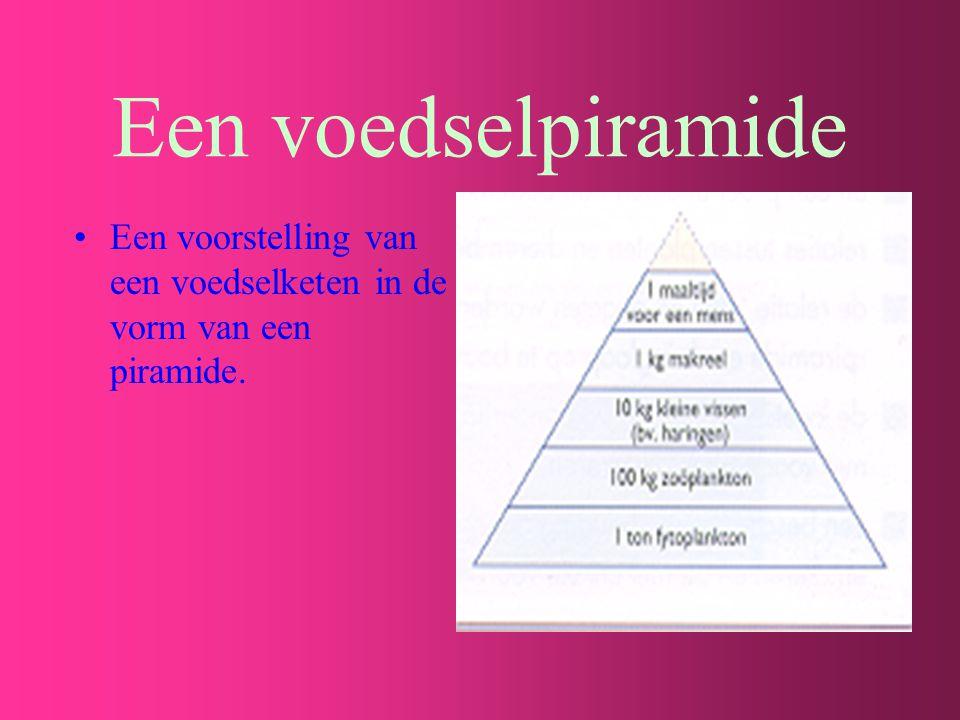 Een voedselpiramide Een voorstelling van een voedselketen in de vorm van een piramide.