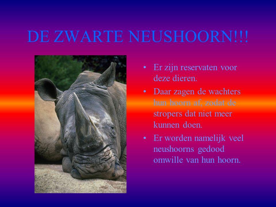 DE ZWARTE NEUSHOORN!!! Er zijn reservaten voor deze dieren.