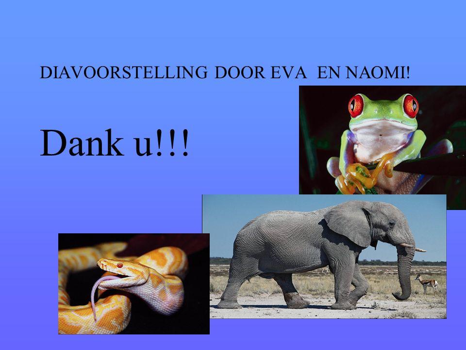DIAVOORSTELLING DOOR EVA EN NAOMI!