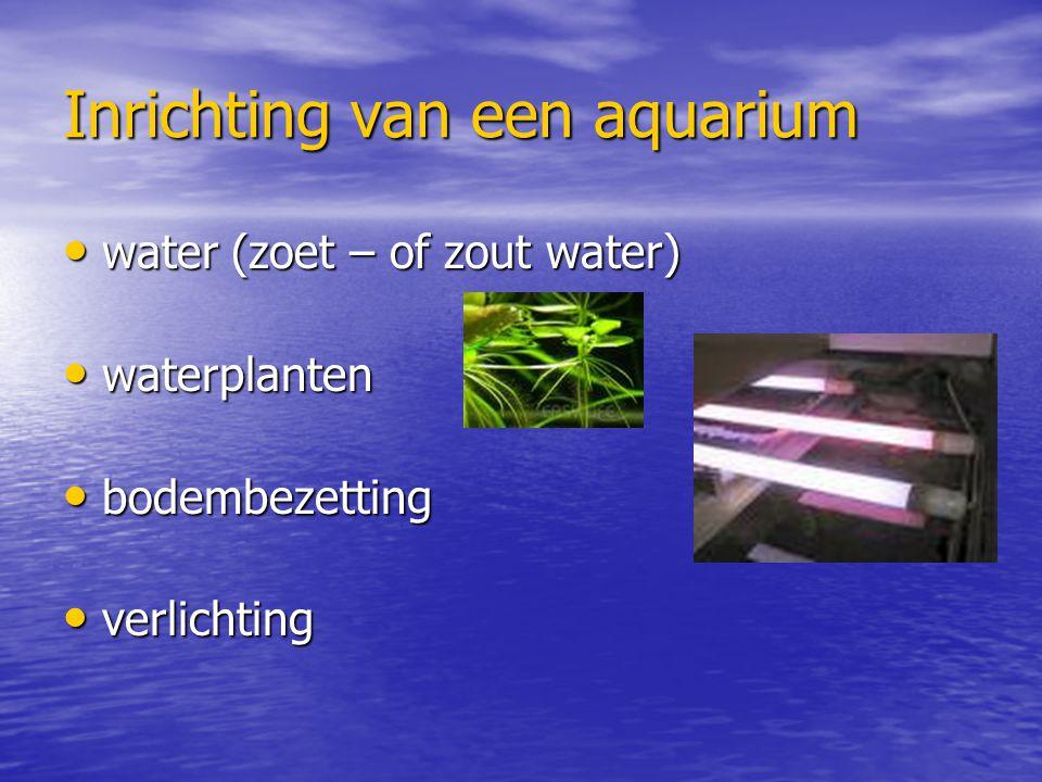 Inrichting van een aquarium