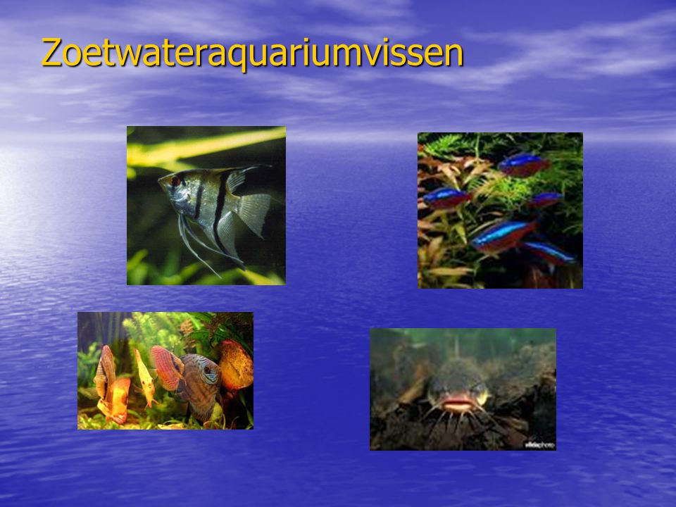 Zoetwateraquariumvissen