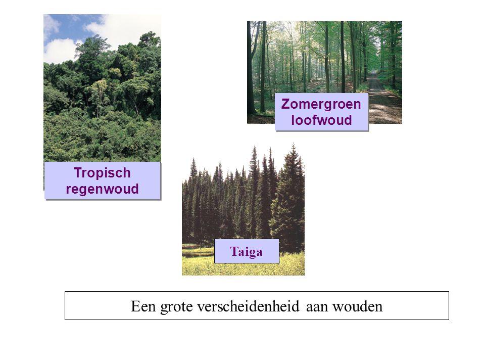 Een grote verscheidenheid aan wouden