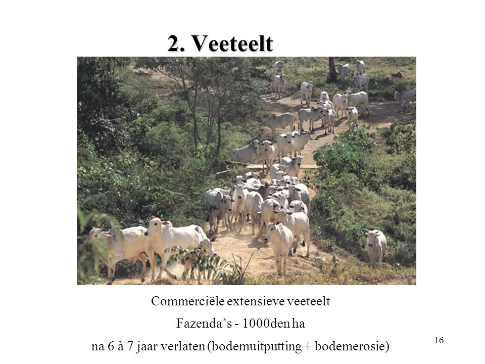 2. Veeteelt Commerciële extensieve veeteelt Fazenda's - 1000den ha