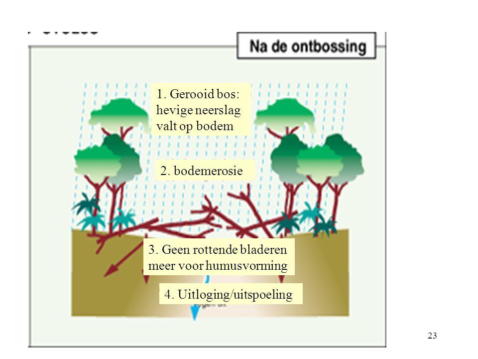 1. Gerooid bos: hevige neerslag valt op bodem