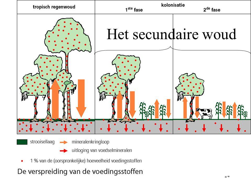Het secundaire woud