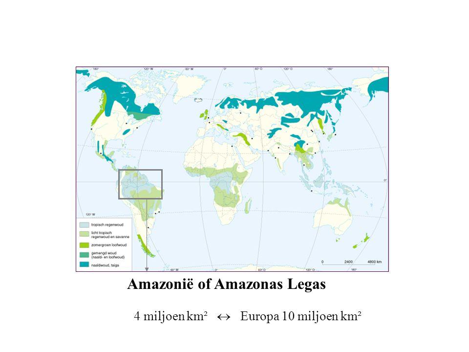 Amazonië of Amazonas Legas