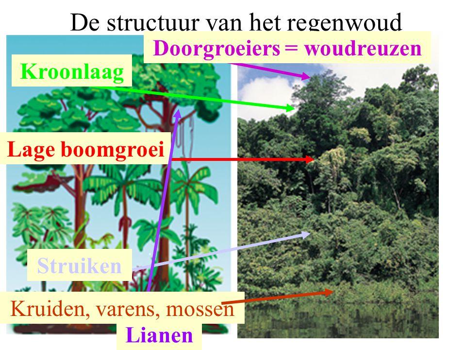 De structuur van het regenwoud