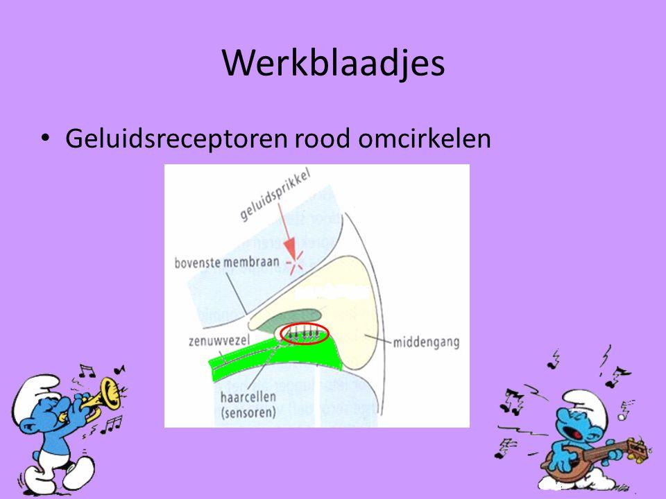 Werkblaadjes Geluidsreceptoren rood omcirkelen