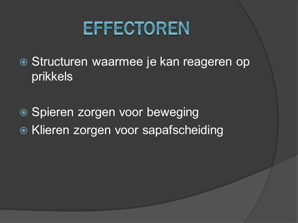 Effectoren Structuren waarmee je kan reageren op prikkels