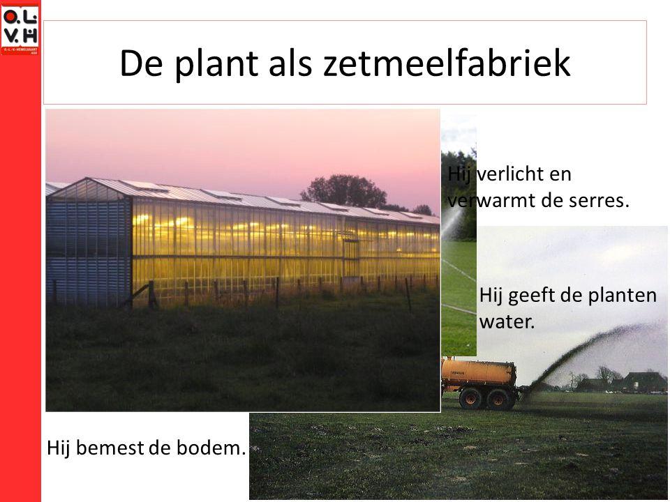 De plant als zetmeelfabriek