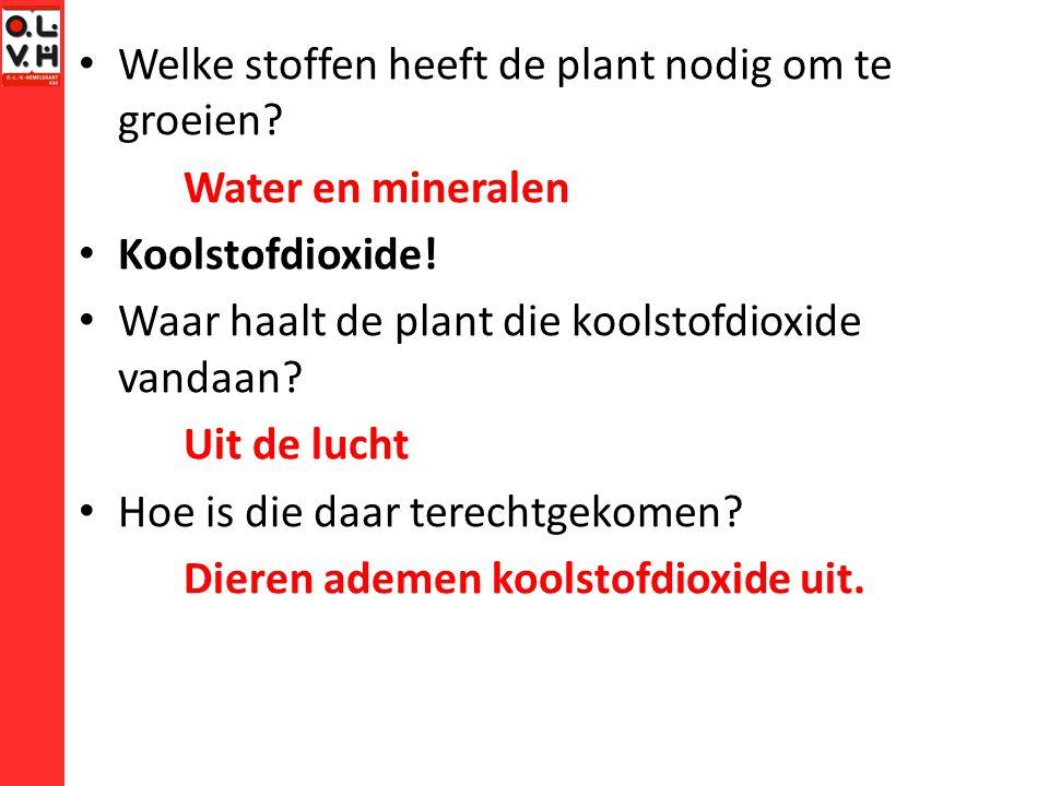 Welke stoffen heeft de plant nodig om te groeien