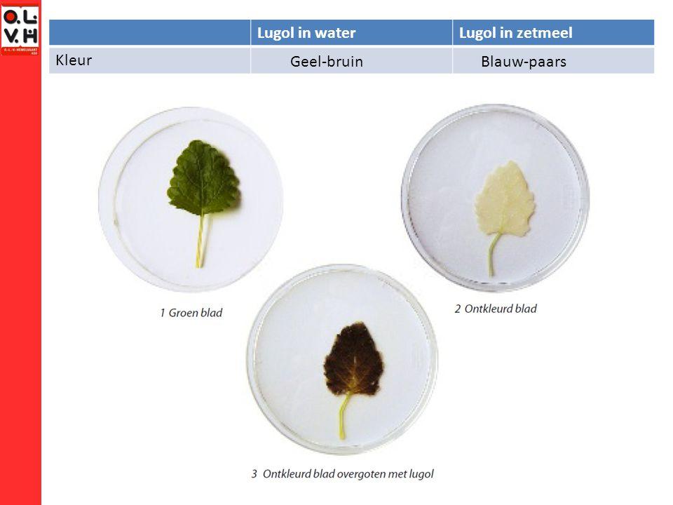 Lugol in water Lugol in zetmeel Kleur Geel-bruin Blauw-paars