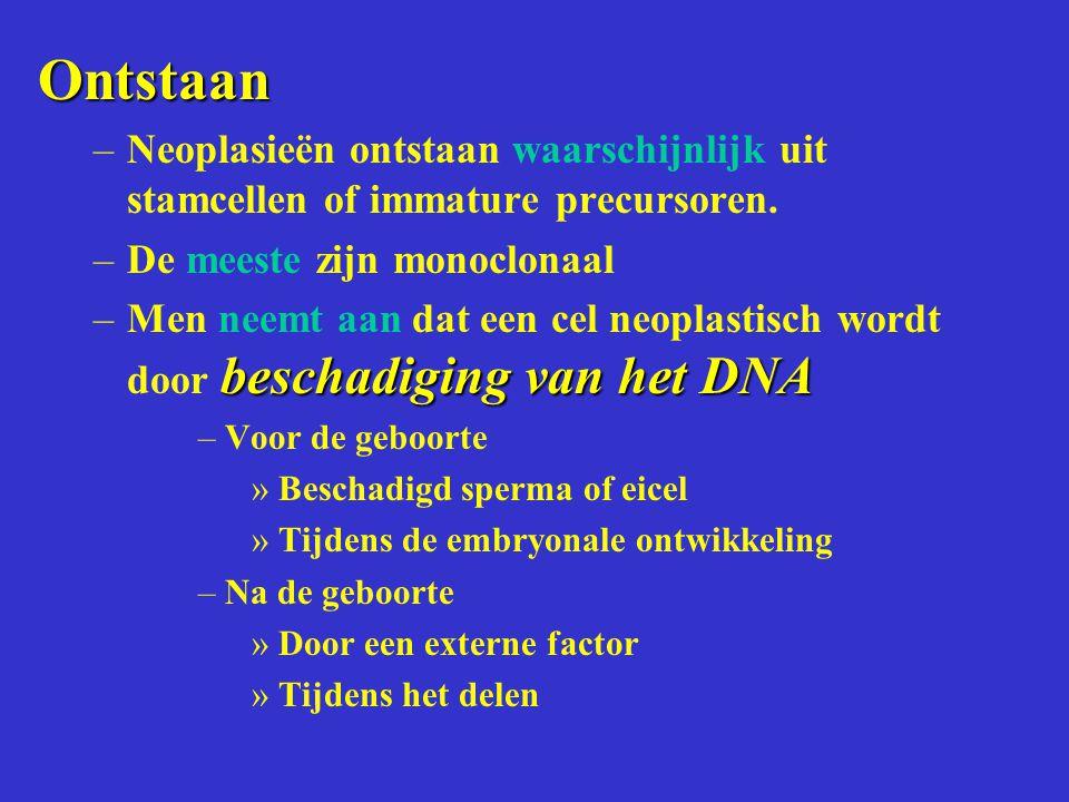 Ontstaan Neoplasieën ontstaan waarschijnlijk uit stamcellen of immature precursoren. De meeste zijn monoclonaal.