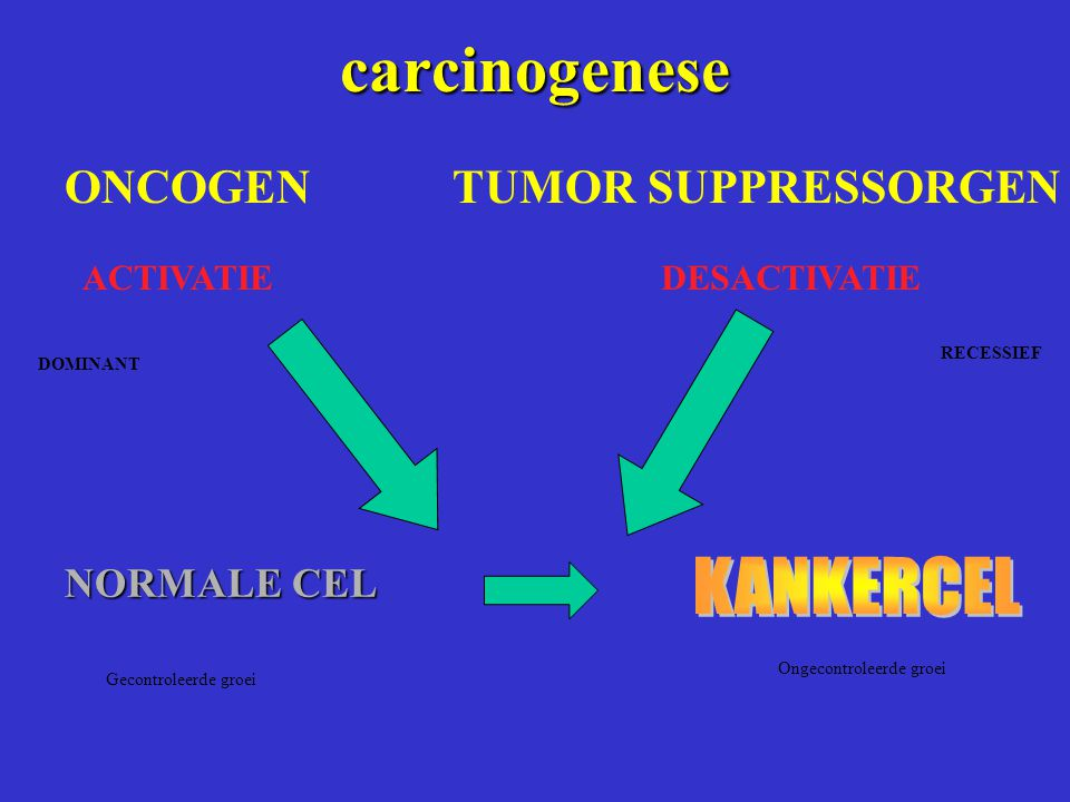 carcinogenese KANKERCEL NORMALE CEL ONCOGEN TUMOR SUPPRESSORGEN