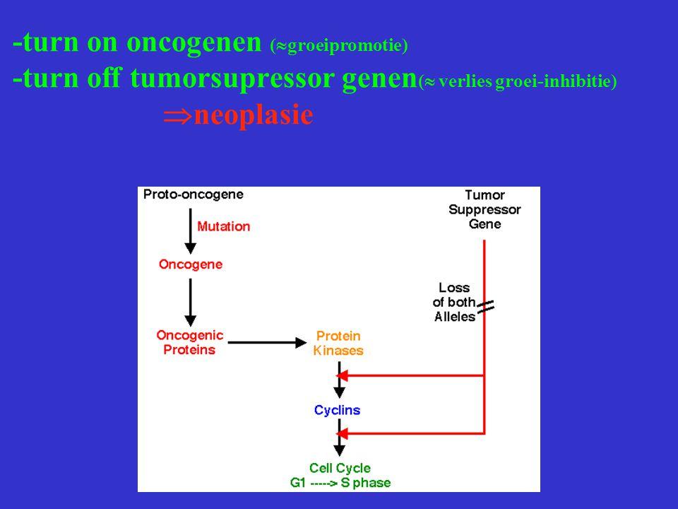 -turn on oncogenen (groeipromotie) -turn off tumorsupressor genen( verlies groei-inhibitie) neoplasie