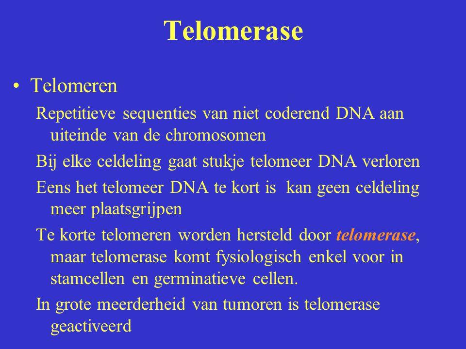 Telomerase Telomeren. Repetitieve sequenties van niet coderend DNA aan uiteinde van de chromosomen.