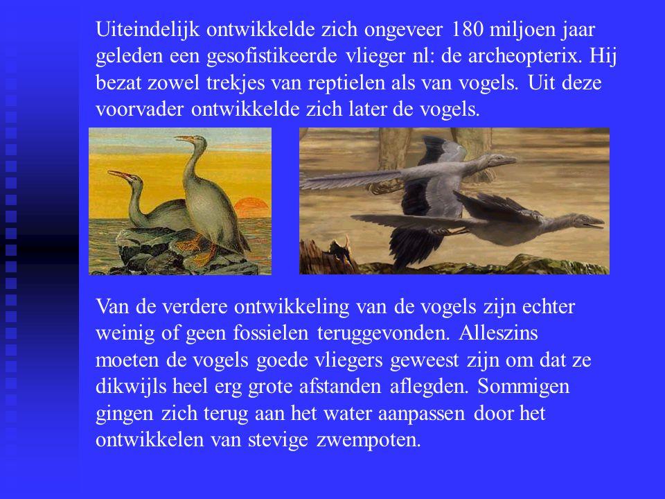 Uiteindelijk ontwikkelde zich ongeveer 180 miljoen jaar geleden een gesofistikeerde vlieger nl: de archeopterix. Hij bezat zowel trekjes van reptielen als van vogels. Uit deze voorvader ontwikkelde zich later de vogels.