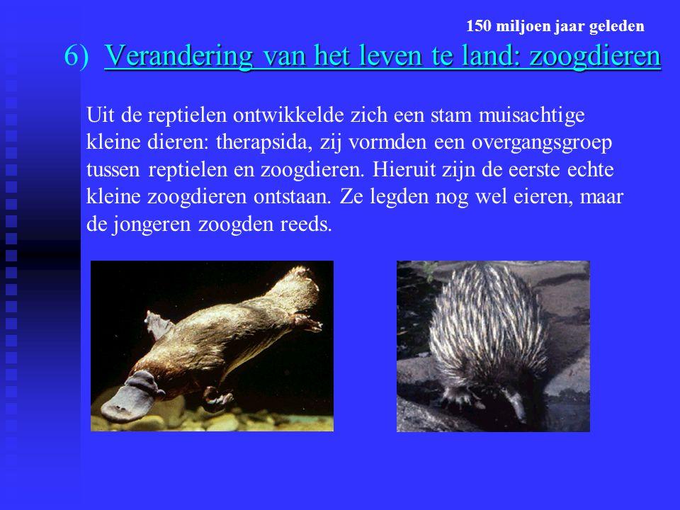 6) Verandering van het leven te land: zoogdieren