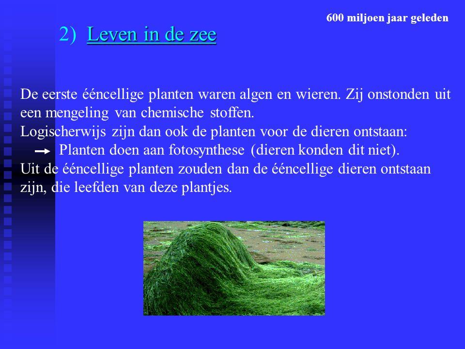 600 miljoen jaar geleden 2) Leven in de zee.